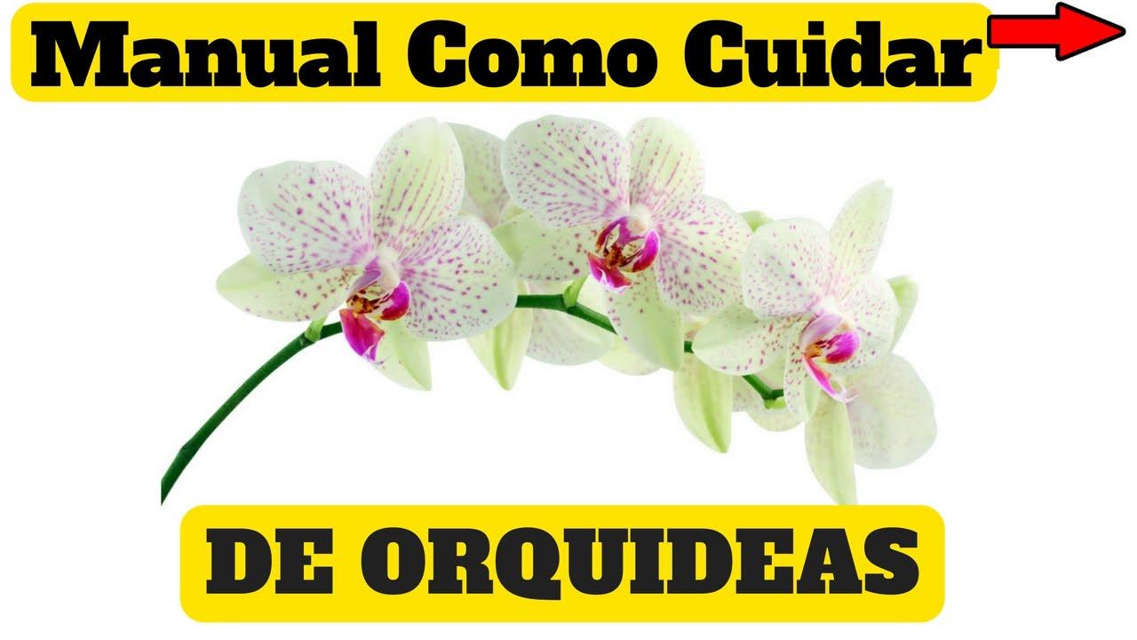 como cuidar de orquideas