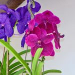 Orchids Of Indonesia