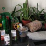Abertura Rifa Rosa | Andréa e suas orquídeas