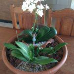 Como fazer um arranjo de orquídeas