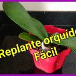 Reprodução das Orquideas