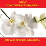 Orquídea Encyclia cordigera