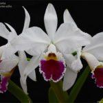 Orquídeas do Mato